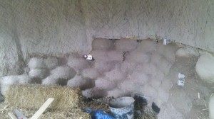 The tyre wall steps down at the back, and merge into the straw wall in the same coat of plaster.